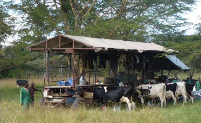 Hamish Grant's Mobile Milking Parlour