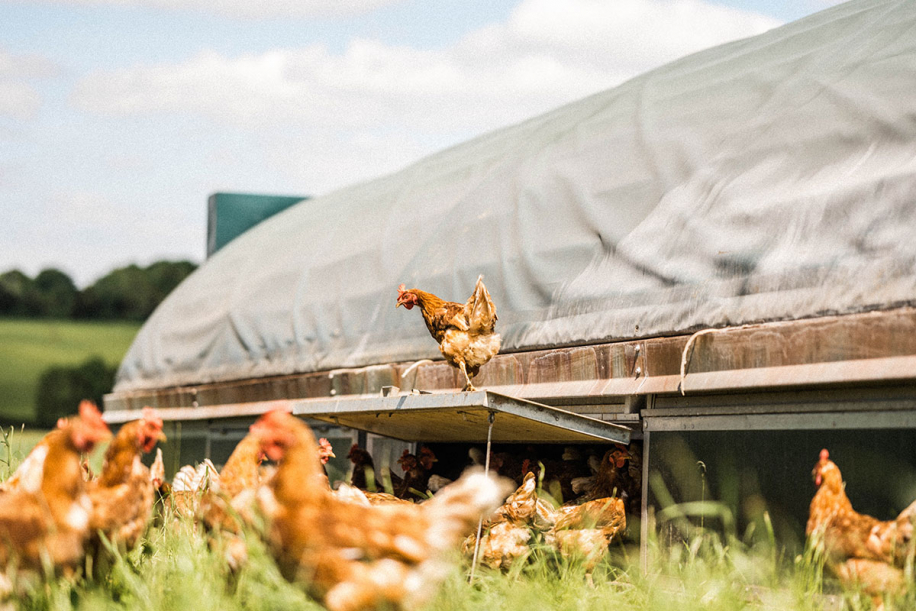 Kingsclere Estates Chickens JoinCommunity218