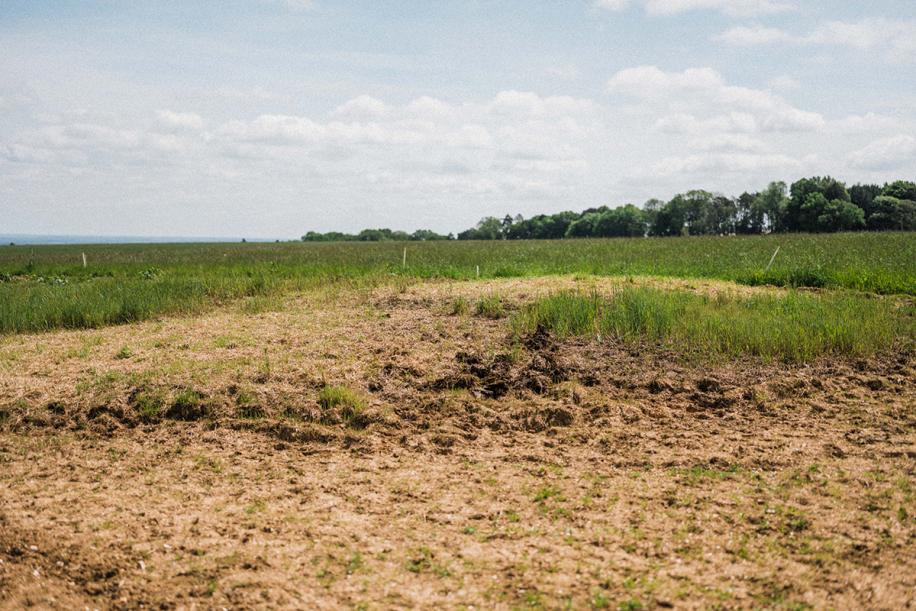 Kingsclere Estates pitch up land 97