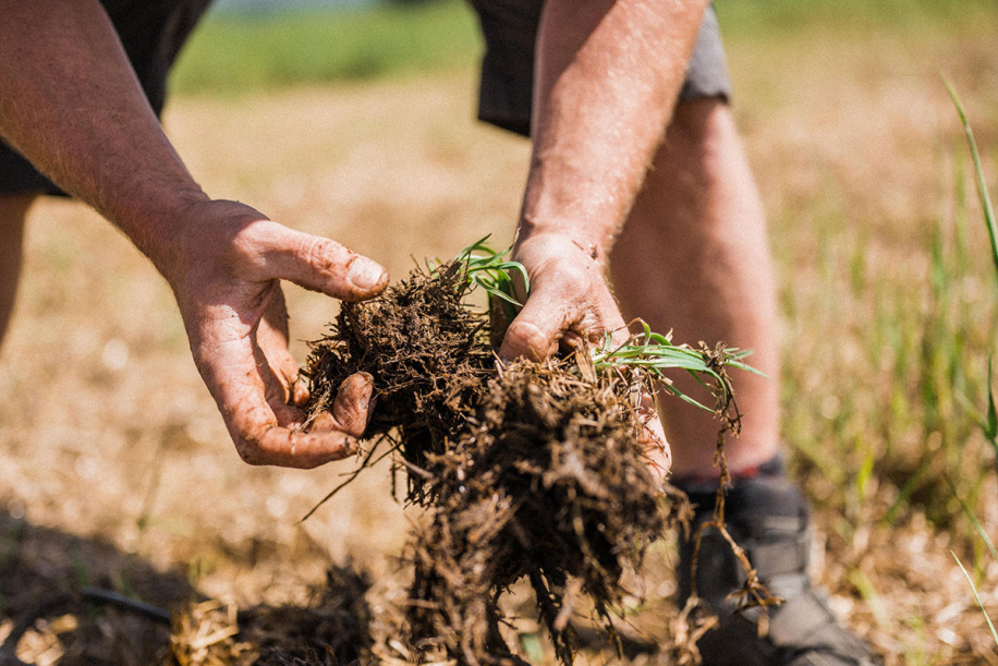Kingsclere Estates Soil JoinProducers 82