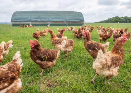 The Pasture Raised Egg Company